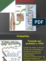 2.Cromosomas