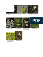 Plantas Endemicas
