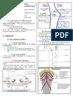 Anatomie11