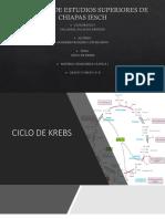 Ciclo de Krebs. Pptx
