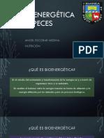Bioenergética en Peces