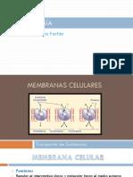 Clase 2 Membrana Celular