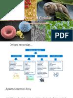 06_Diversidad-Celular.pdf