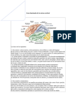 Áreas Funcionales de La Corteza Cerebral