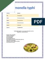 Salmonella typhi 123.docx