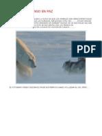 Oso Polar - Vengo en Paz