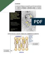 7. Resumen Membranas Biologicas