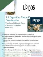Digestion y Absorcion Lipidos