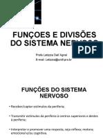 funções e divisões do sistema nervoso