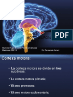 Motoneurona Superior