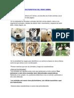 Caracteristicas Del Reino Animal
