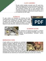 GATO ANDINO1.docx