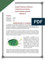Biosintesis de La Clorofila