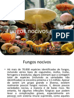 Fungos Uteis e Nocivos