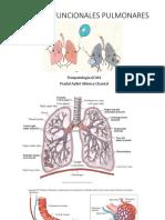 Unidad Funcional Pulmonar