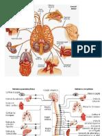 Neurociencia Imagenes