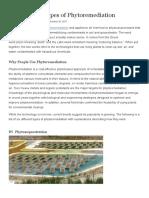 Six Types of Phytoremediation