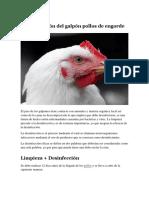Desinfección Del Galpón Pollos de Engorde