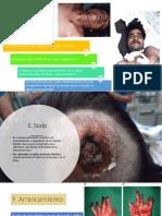 Lesionología d h