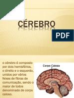 2 Cérebro