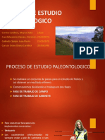 Proceso de Estudio Paleontologico