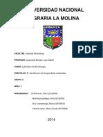 5 Informe de Microbiologia Identificación de Hongos Medio Ambientes (1)