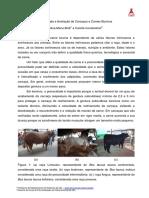 Qualidade e Avaliacao de Carcacas e Carnes Bovinas - GPAC UEL