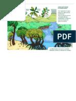 grafico manglares 1