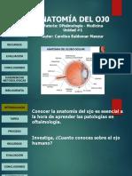 webquest anatomia ojo