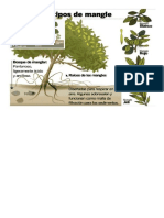 grafico manglares 2