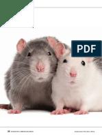 Algo Interesantisissimo Sobre Ratas