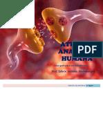 atlasdeanatomiahumana-ambulodegui-2016-160905191356.pdf
