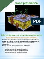 Clase 3 Especializaciones Membrana3.