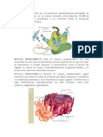 Funciones Partes de La Celula