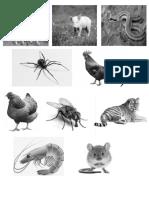 Animales Recortes prueba