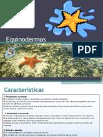 7_Equinodermos
