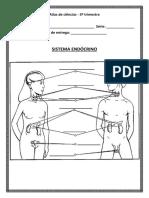 Atlas - Sistema Endócrino