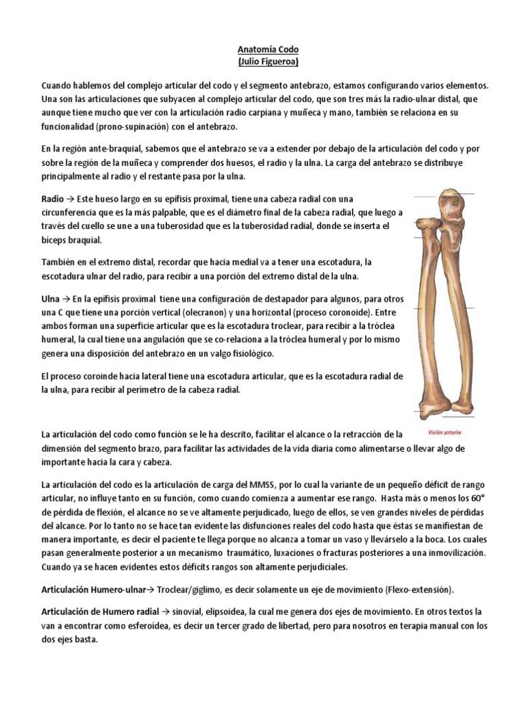 Anatomía Codo Funcional