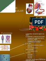 07.sistema cardiovascular.ppt