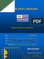 Ovinos Uruguay