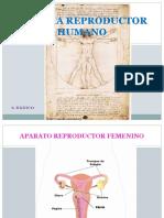 articles-23028_recurso_ppt (1).pptx
