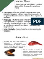Situacion de La Piscicultura en Colombia y El Mundo 2