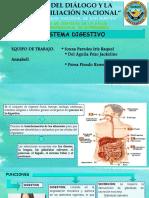 Sistema Digestivo-Adulto 2 Ok