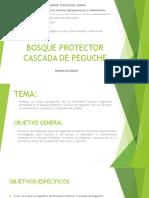 Bosque Protector Cascada de Peguche