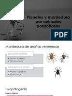 17.-Piquetes y mordedura por animales ponzoñosos.pdf