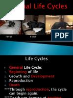 Animal Life Cycles2014455