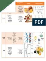 Biomolecules Chart