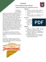 Caracterizacion Quimica Del Glucogeno