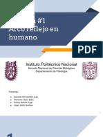 Arco Reflejo Humano Palatino Faringeo Epigastrico (1)