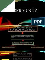 Exposicion Embriologia Sistema Endocrino
